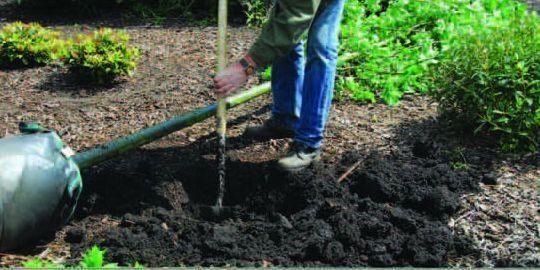 Fiche conseil plantes shopping plantation d 39 un arbre - Plantation arbre en motte ...