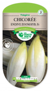 CHICOREE ENDIVE Zoom hyb.f1