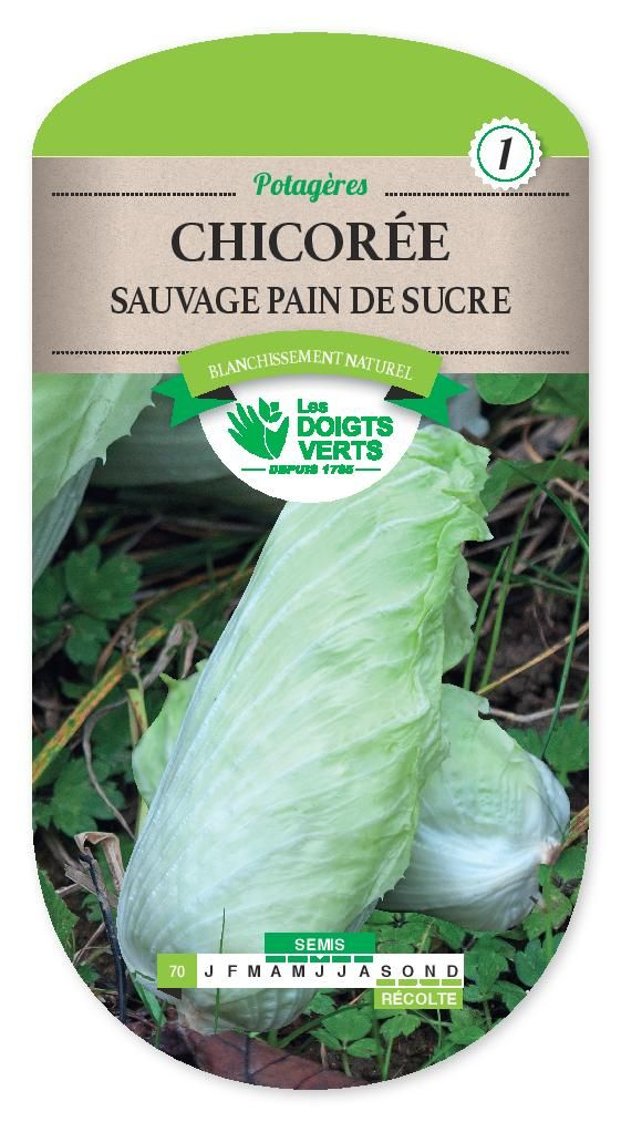 CHICOREE SAUVAGE Pain de Sucre