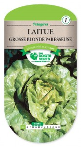 LAITUE grosse blonde paresseuse