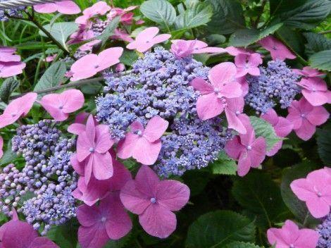 Vente de plantes arbres arbustes et mat riel de jardin for Abri piscine kardinal