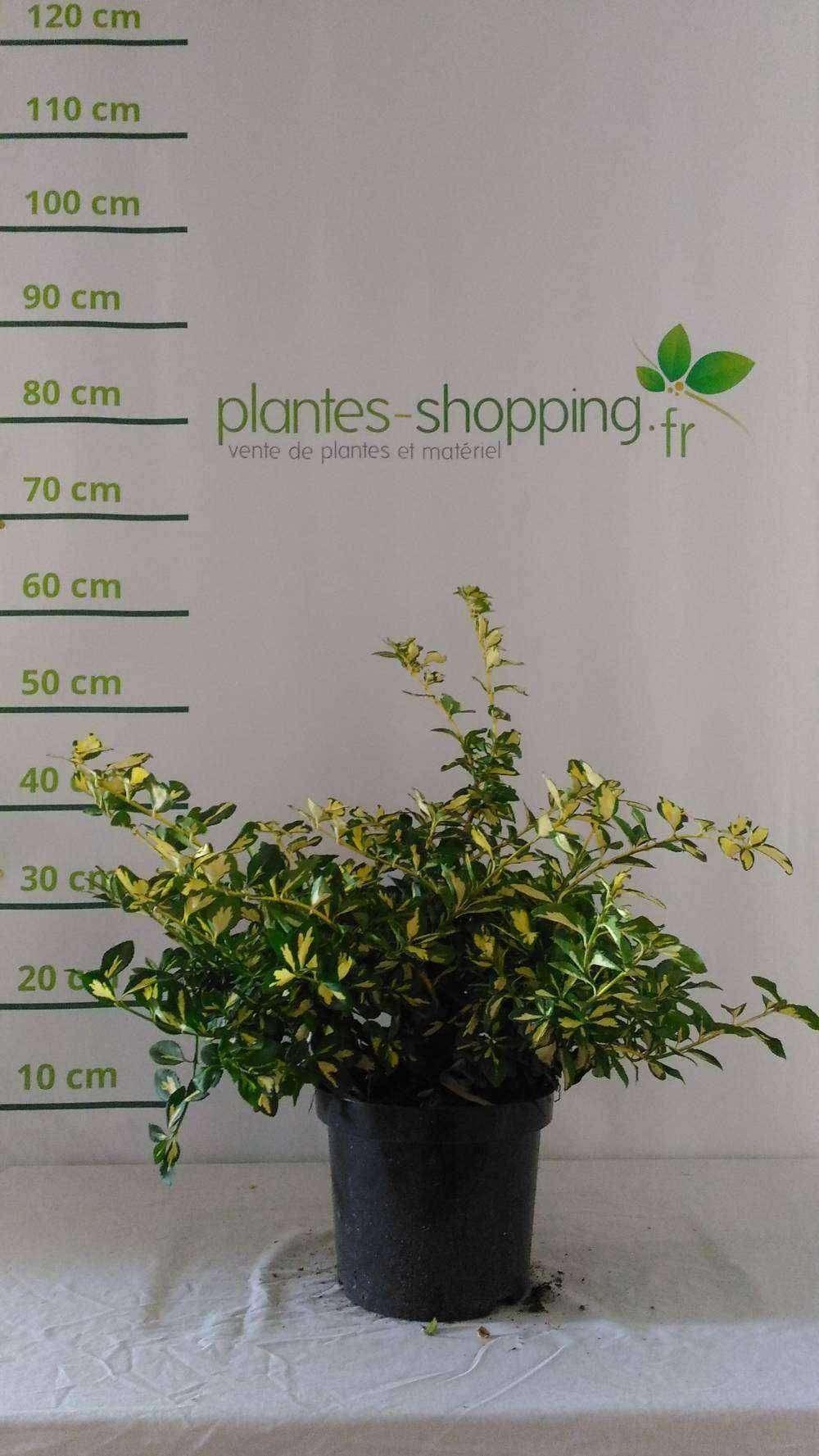 Votre jardinerie en ligne plantes shopping vente de for Plantes et arbustes