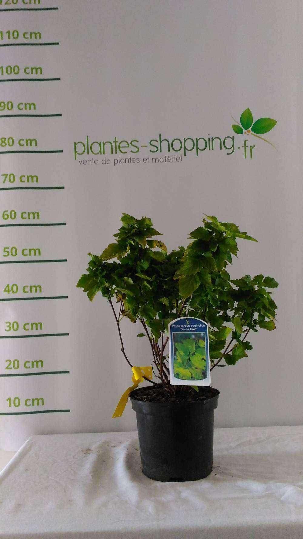 Votre jardinerie en ligne plantes shopping vente de for Plantes jardinerie